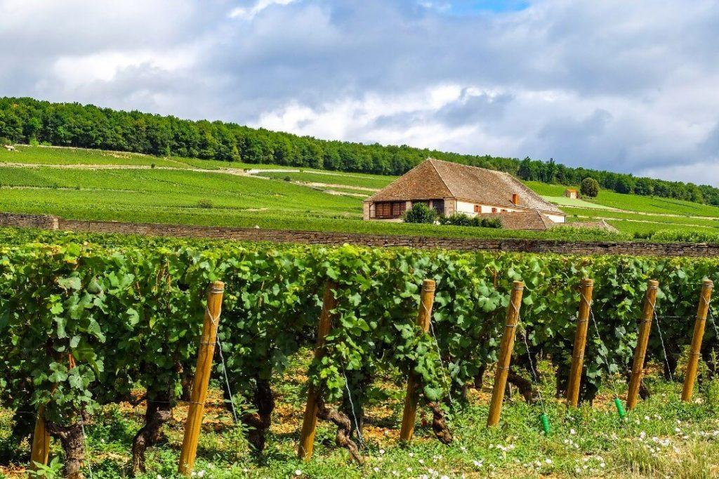 Beaune France Vineyards