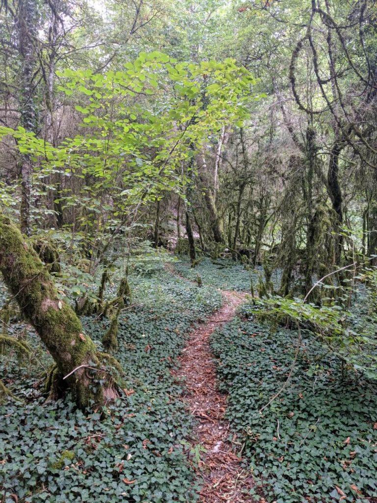 Burgundy Hike through Woods