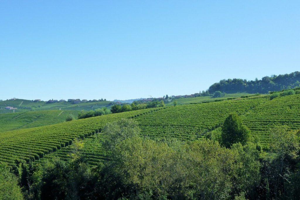Piedmont Italy Vineyards