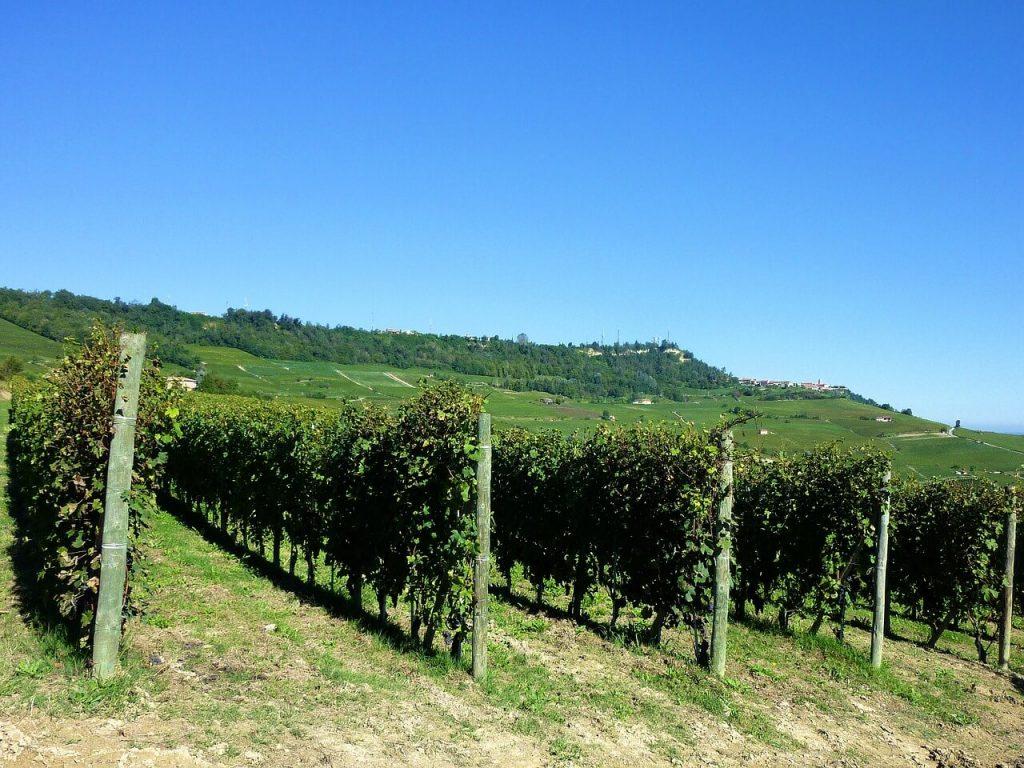 Barolo Italy Vineyards